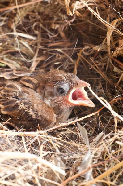 Stock foto: Baby · Haus · Spatz · Nest · Schönheit