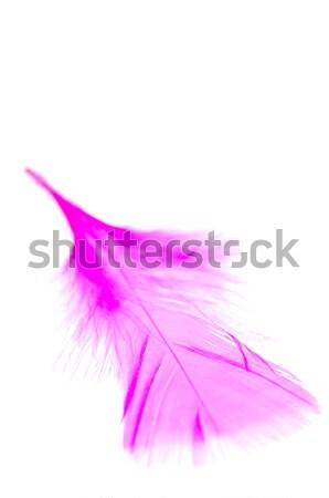 Różowy Pióro odizolowany biały skrzydła ciało Zdjęcia stock © calvste