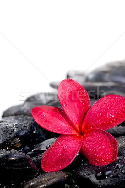çiçek siyah zen taşlar aşırı Stok fotoğraf © calvste