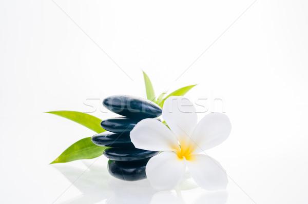 バランスのとれた 禅 石 竹 白 花 ストックフォト © calvste