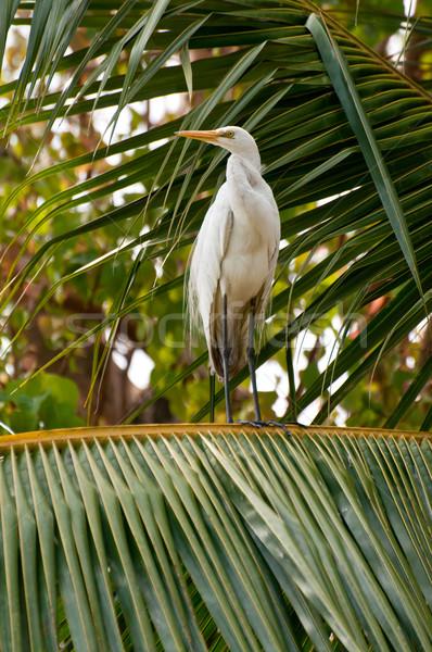 Branco coco árvore posando olho natureza Foto stock © calvste