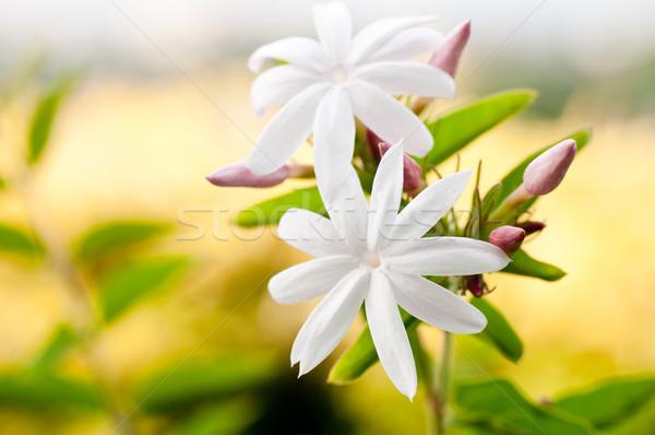 цветы цветок желтый небе Сток-фото © calvste
