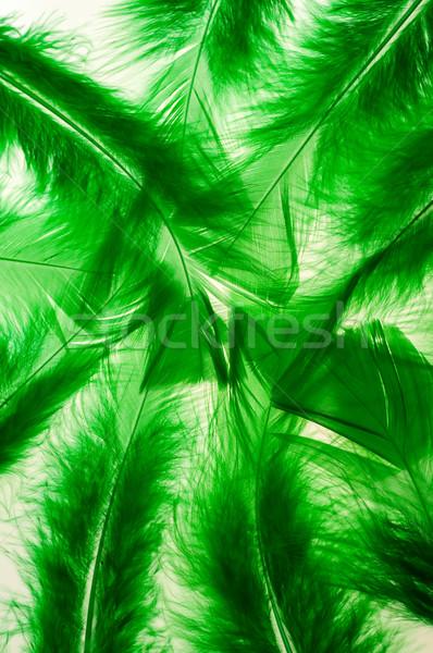 緑 ふわっとした 羽毛 垂直 光 デザイン ストックフォト © calvste