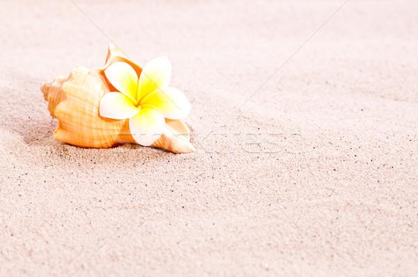 Sea shell and flower on beach sand Stock photo © calvste