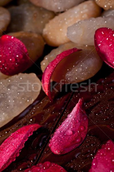 Piros virág szirmok citromsárga folyó kő Stock fotó © calvste