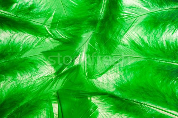 緑 ふわっとした 羽毛 水平な 光 デザイン ストックフォト © calvste