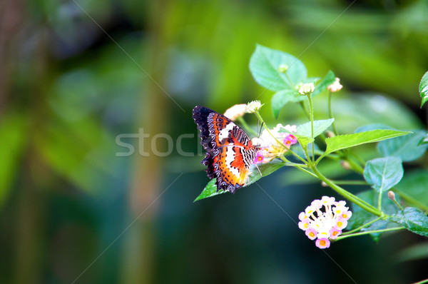 Viceroy butterfly in the garden Stock photo © calvste