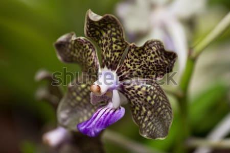 орхидеи bokeh листьев цветок зеленый Сток-фото © calvste