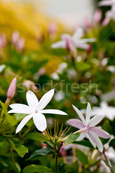 Fiori giardino sfondo verde bianco rosa Foto d'archivio © calvste
