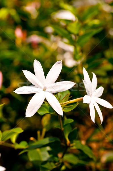Fehér virágok reggel nap háttér zöld Stock fotó © calvste