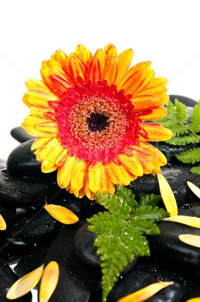 Amarelo laranja pétalas feto preto zen Foto stock © calvste