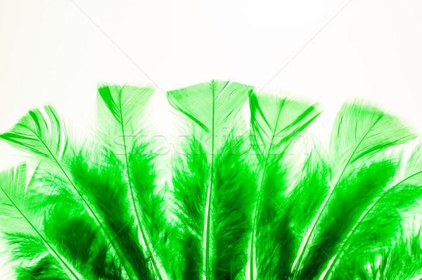 Zielone puszysty jak fan Zdjęcia stock © calvste