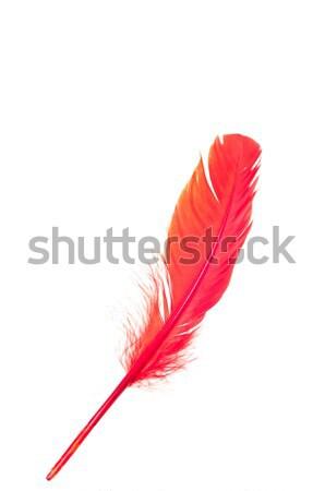 красный Перу изолированный белый крыло тело Сток-фото © calvste