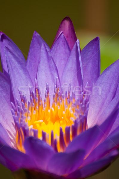 Extreme пруд цветок воды Сток-фото © calvste