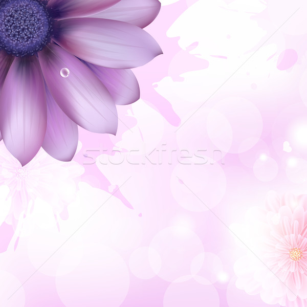 Lilac Gerbers And Paint Splash Stock photo © cammep