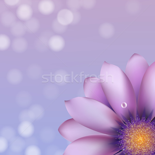 Lilac Gerber With Bokeh Stock photo © cammep