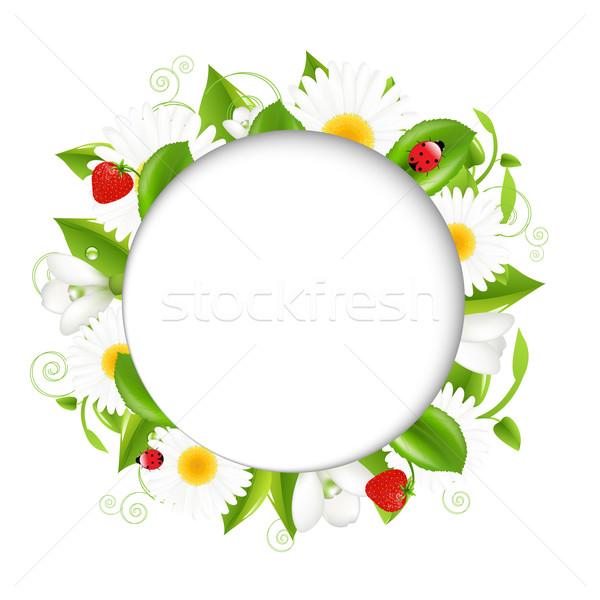 Verão ilustração joaninha isolado branco flor Foto stock © cammep