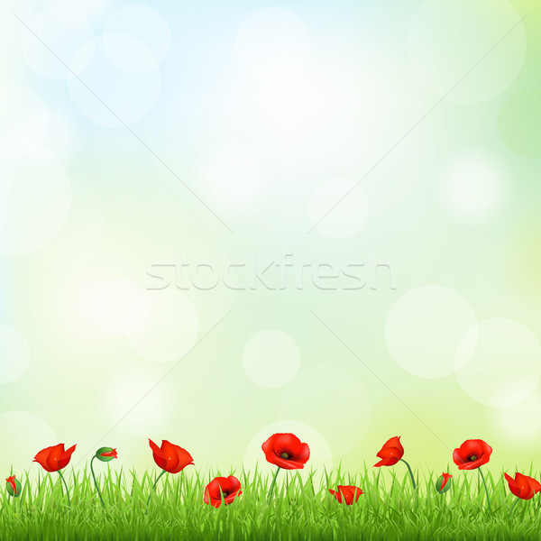 Red Poppy And Grass Border Stock photo © cammep