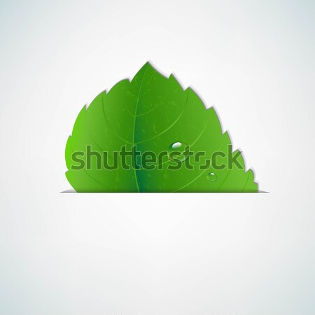 Green Leaf With Divide Stock photo © cammep