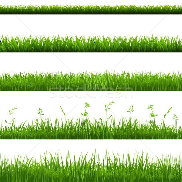 трава большой набор градиент Сток-фото © cammep