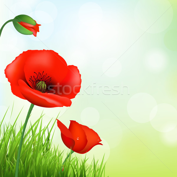 Red Poppy And Green Grass Stock photo © cammep