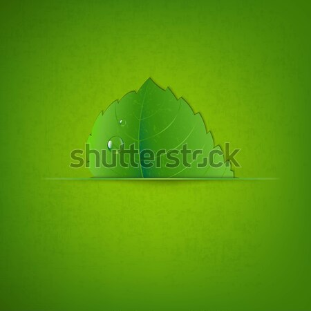 Leaf With Divider Stock photo © cammep