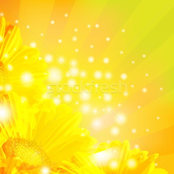Orange Gerber With Sunburst Stock photo © cammep