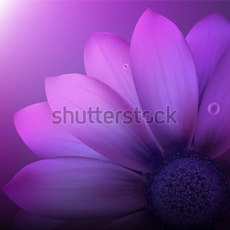 Fioletowy świeże wiosną szczęśliwy ogród piękna Zdjęcia stock © cammep