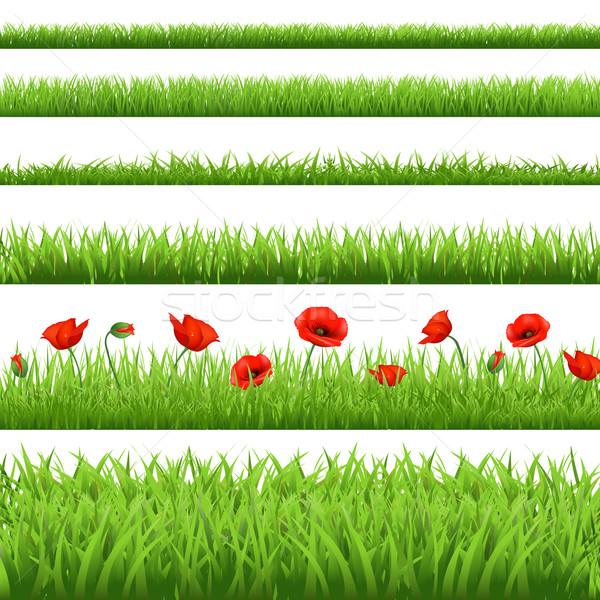 Photo stock: Herbe · verte · rouge · pavot · isolé · blanche