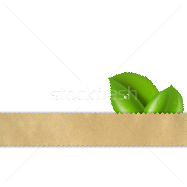 Abstract retro vector papier blad natuur Stockfoto © cammep
