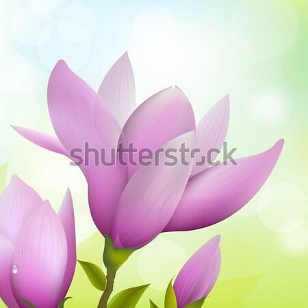 Abstract magnolia natuur blad schoonheid zomer Stockfoto © cammep