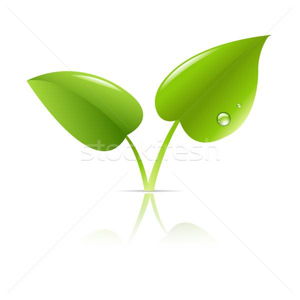 Zielony liść liści ziemi zielone sylwetka roślin Zdjęcia stock © cammep