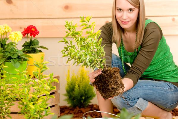 Stock fotó: Kertészkedés · nő · ültet · terasz · tavasz · természet
