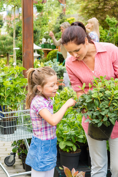 Mother daughter choosing flowers in garden shop Stock photo © CandyboxPhoto