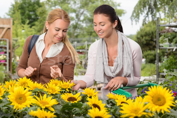 Two woman choose sunflowers in garden center Stock photo © CandyboxPhoto