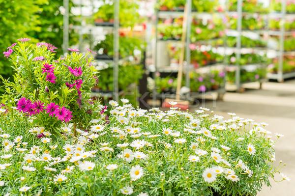 теплица саду центр магазин цветы Сток-фото © CandyboxPhoto