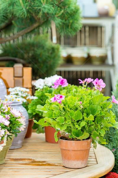 Virágok kert centrum üvegház választék színes Stock fotó © CandyboxPhoto
