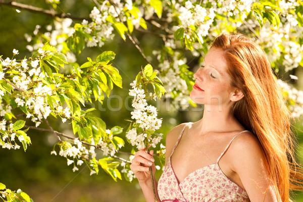 Сток-фото: весны · Blossom · дерево