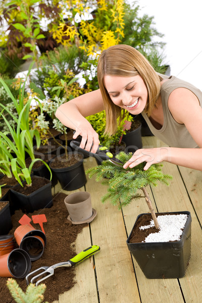 Gardening - woman trimming bonsai tree Stock photo © CandyboxPhoto