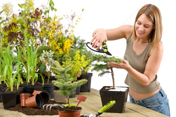 ガーデニング 女性 盆栽 ツリー 白 成長 ストックフォト © CandyboxPhoto