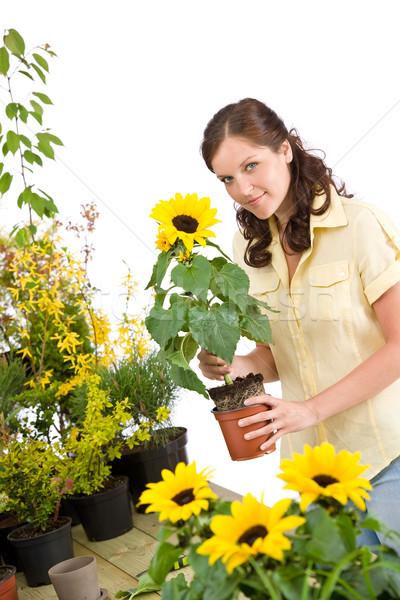 Kertészkedés nő tart virágcserép napraforgó mosolygó nő Stock fotó © CandyboxPhoto