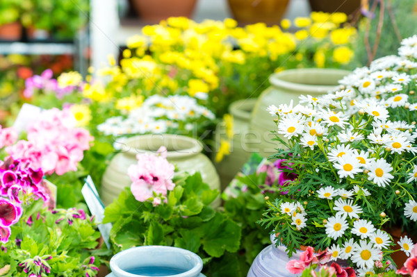 Papatya merkez perakende depolamak beyaz Stok fotoğraf © CandyboxPhoto