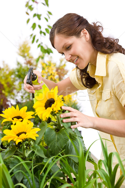 Gardening - woman sprinkling water on sunflower blossom Stock photo © CandyboxPhoto