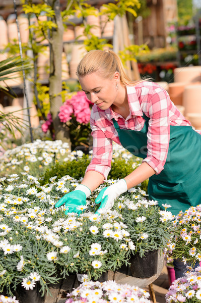 Garden center woman touching potted daisy flowers Stock photo © CandyboxPhoto