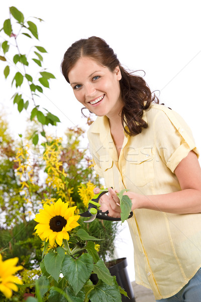 Gardening - smiling woman with sunflower and pruning shears Stock photo © CandyboxPhoto