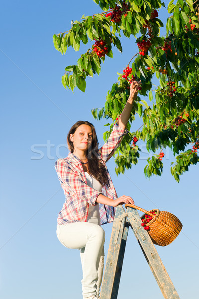 Kers boom oogst zomer vrouw zonnige Stockfoto © CandyboxPhoto