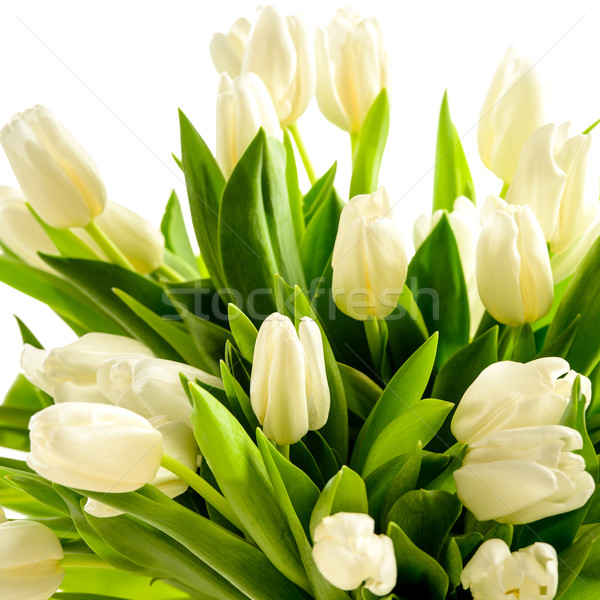 White tulip flowers Stock photo © CandyboxPhoto