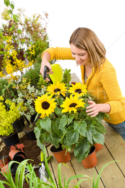 Gardening - woman sprinkling water to sunflowers  Stock photo © CandyboxPhoto