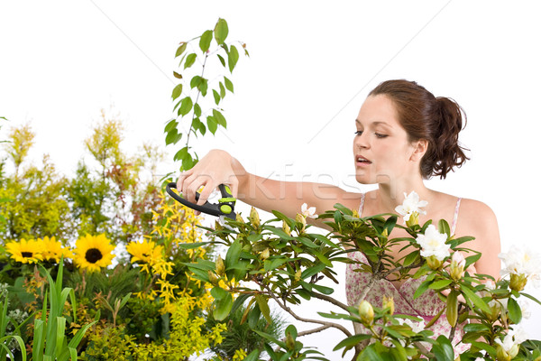 Gardening - woman cutting flower with pruning shears Stock photo © CandyboxPhoto