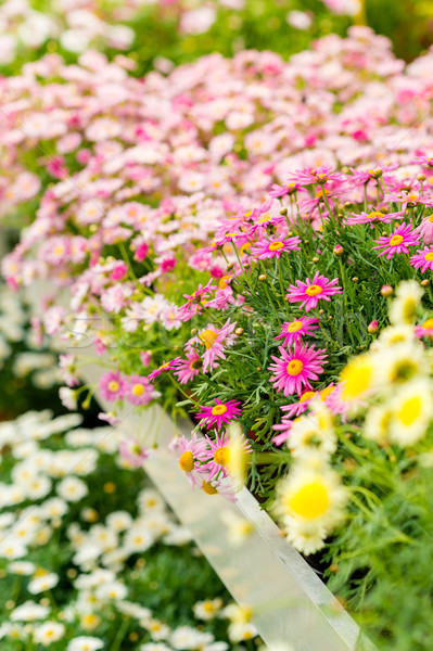 Colorful flowers at garden centre retail store  Stock photo © CandyboxPhoto